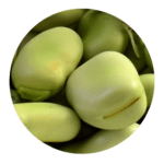 habas-beans-